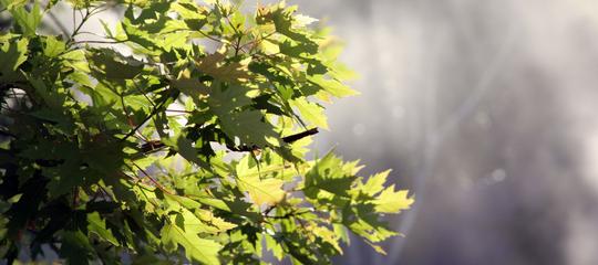 Bain de forêt : 3 choses à faire pour se mettre au shinrin-yoku