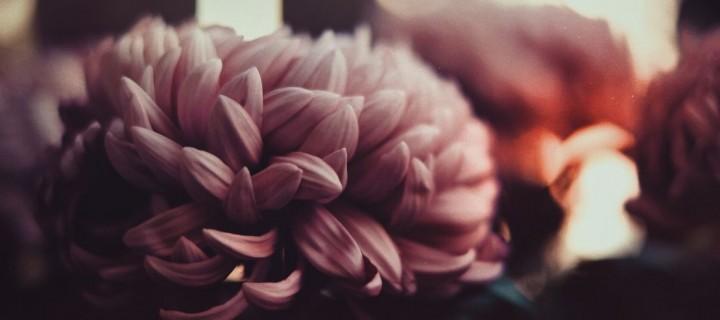 Offrir des fleurs, un geste plus engagé qu'il n'y paraît