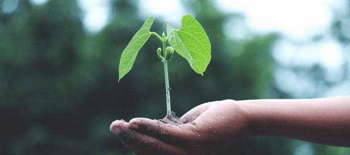 12 livres pour mieux comprendre l'urgence écologique